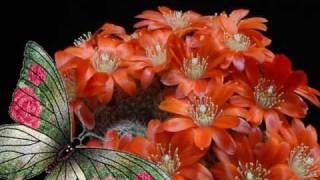 Fluturele si cactusul (Butterfly and cactus)