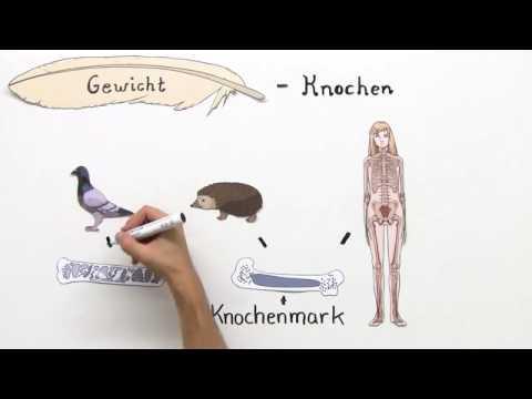 VÖGEL | ANPASSUNG AN DEN FLUG | Biologie | Biologie der Tiere ...