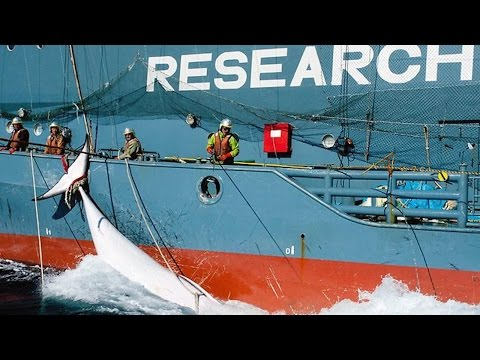 🇮🇸 Killing Whales   People and Power from YouTube · Duration:  25 minutes 1 seconds