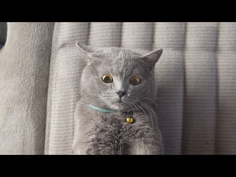 The Ultimate Viral Cat Video