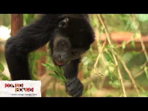 Congo Bongo - Location Video at Manzanillo Beach House Rental Costa Rica