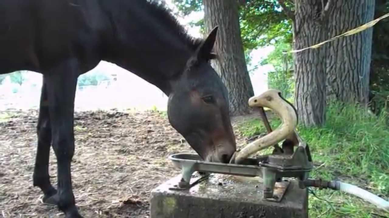 Weidepumpe Weidetränke Selbsttränke für Pferd Esel Muli - YouTube