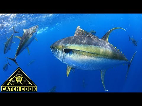 The Ultimate Yellowfin Tuna Fishing Experience [CatchCook] Cape Town