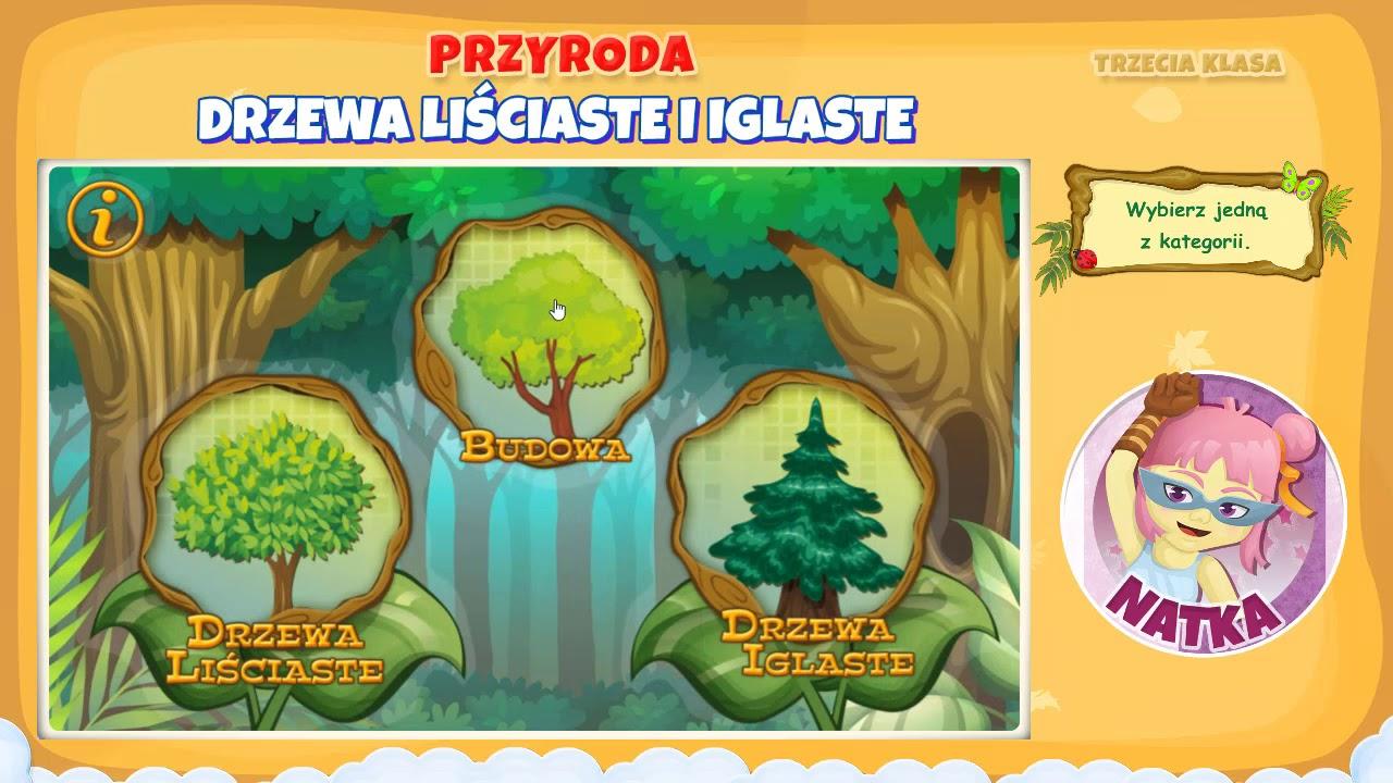 Drzewa Lisciaste I Iglaste Youtube