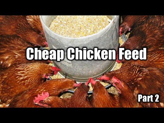 Cheap Chicken Feed Formulation Part 2