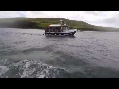 Boat trip in Dingle bay in search of Fungi the Dolphin
