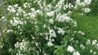 202. Неприхотливые кустарники, которые украсят ваш сад