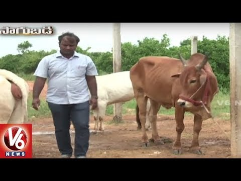 Sagubadi : Success Story Of Organic Farmer Praveen Kumar | W