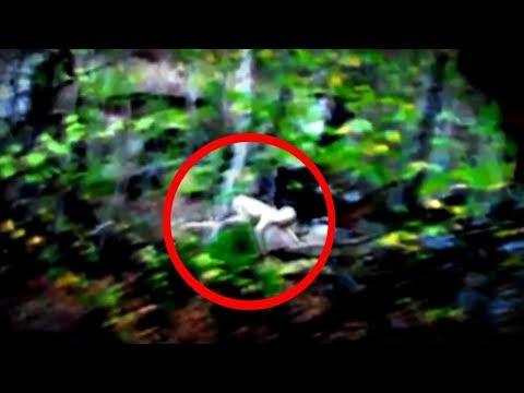 15 The Rake Sightings Caught on Camera