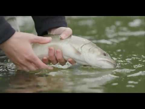 Fishing BC Presents: Exploring The Waters Around Squamish With Valley Fishing Guides
