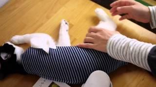 Одежду носить после кот после операции ,cat25net,猫ニャーゴ