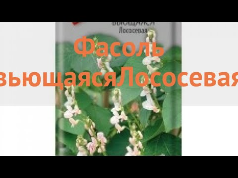 Фасоль ветвистейший Вьющаяся Лососевая 🌿 обзор: как сажать, семена фасоли Вьющаяся Лососевая