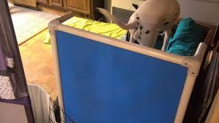 Athlete Heiden Ariot b4 noon kitchen futon 8192017 thumbnail