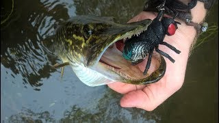 Pike Eats Poo Fly Toy!? Clear Water Crank and Surface Fishing