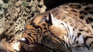 Argelès Gazost, Visite du parc animalier  mai 2017