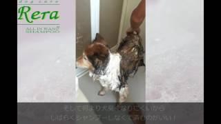 犬用リンスインシャンプーReraはワンズ・ハーツ http://www.wans-hearts...