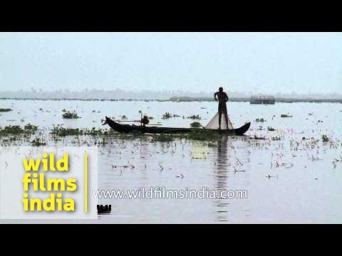 Local boatmen fishing in backwaters of Kerala - India