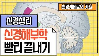 #물리치료사 전공기초강의▶요점정리: 해부생리학_신경생리