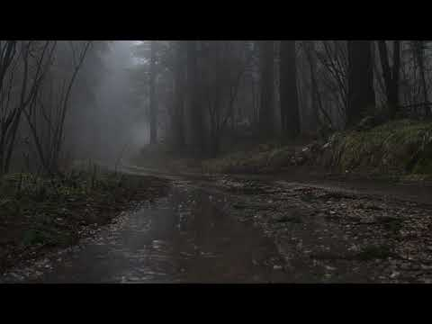 Relaxing Sound Of Rain Forest Puddles 2 Hours / Light Rain And Rain Drops Falling From Trees
