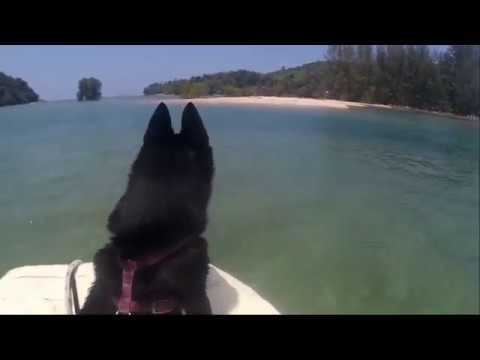 Sailing Schipperkes explore Ban Khuan sea river in Thailand