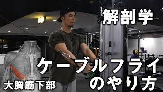 大胸筋下部を鍛えるケーブルフライ(クロス)のやり方【解剖学】