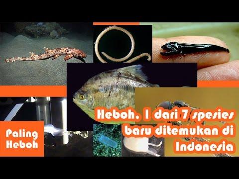 HEBOH, 1 DARI 7 spesies baru yang ditemukan ilmuan ternyata ada di INDONESIA