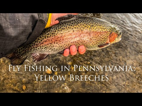 Fly Fishing In Pennsylvania: Yellow Breeches