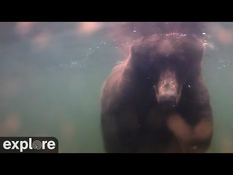 Underwater Salmon Cam - Katmai National Park, Alaska powered by EXPLORE.org