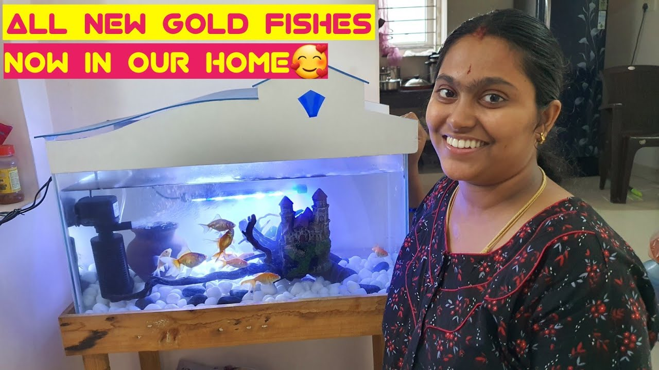Our new Gold fishes in our happy house | Colourful fish Tank setup for me