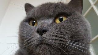 №3 Как вывезти кота в Польшу из Украины?
