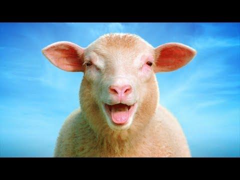 Nebuďme jako stádo ovcí! - filozof SOKRATES