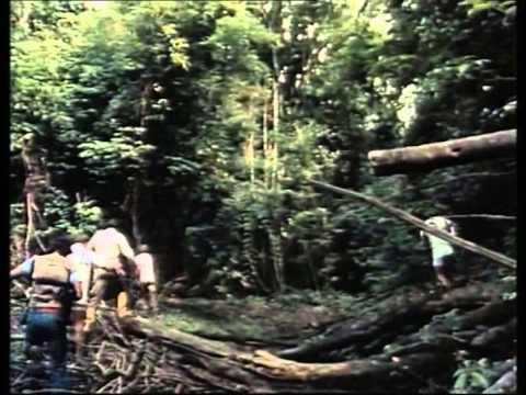 (17) La Collection COUSTEAU - Amazonie  au pays des milles rivières (1983)