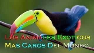 Los Animales Exóticos Mas Caros Del Mundo