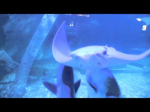 Atlantic City Aquarium, New Jersey, USA - GoHop.ie - Unravel Travel TV