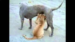 Самые угарные кошки 2016 отжигают Видео 3