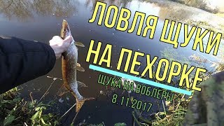 Ловля щуки на Пехорке 08.11.2017