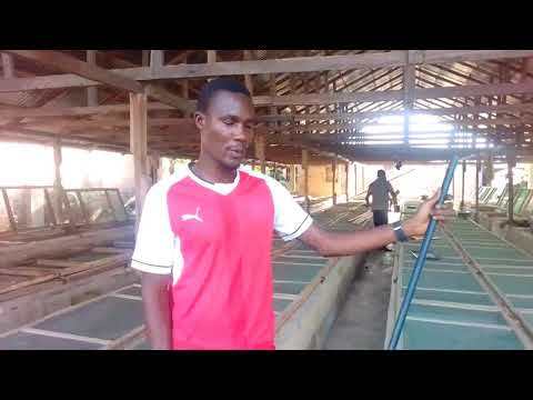 Management of young snails under intensive system of snail farming