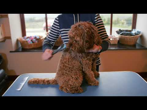 The Best Labradoodle Dog Grooming Slicker Brush The Doodle