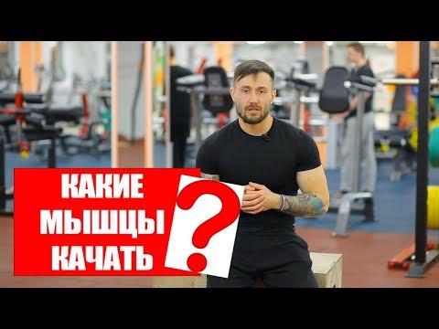 Какие Мышцы Нужно Качать