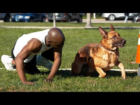 Dog Vs Human Sprinting - Who's Faster?