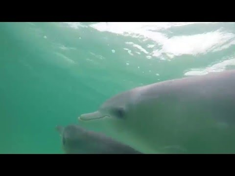 Snorkeling With Dolphins On Kangaroo Island Australia