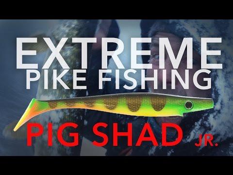 Apokaliptiksa Līdaku Cope Uz 20cm Gumiju - Pig Shad Jr. (English Subtitles)