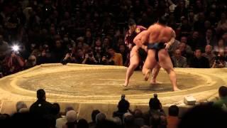 Мэргэжлийн сумо бөхийн 69 дэх их аварга Хакухо М.Даваажаргал