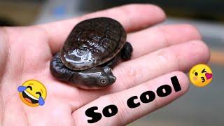 Cận cảnh loài rùa kì dị với chiếc cổ dài và khuôn mặt tấu hài vô đối 🤣