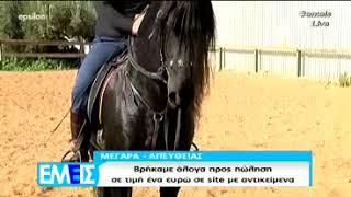 Φάρμα Γκοσδής - Κανάλι Έψιλον (Εμείς) - Ρεπορτάζ για άλογα