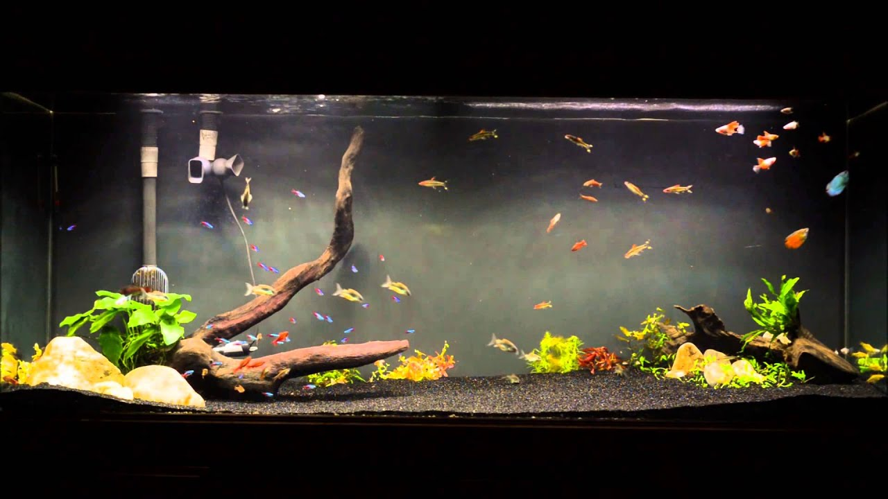 100 Gallon Planted Display Tank   YouTube