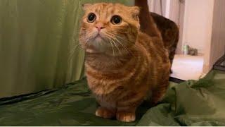 心配してると思ったら猛ダッシュで立ち去る末っ子猫