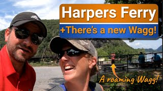 Can Dustin backup a 5th wheel? | Harpers Ferry with the Wayward Waggs
