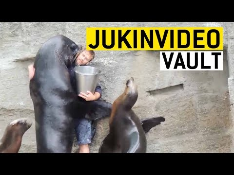 Funny Seal/Sea Lion Videos Compilation|| JukinVideo Vault