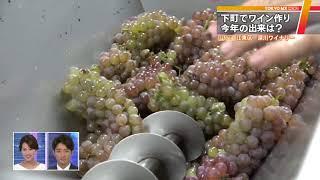 実りの季節・秋を迎え、東京都内でも今年のワインの仕込みが始まってい...